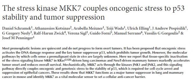 kinase_MKK7